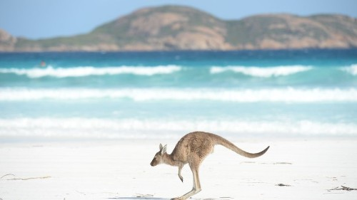 Dramatic video captures heroic police rescue of a drowning baby kangaroo