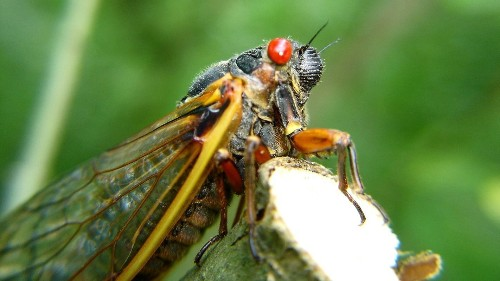 Insects get their sense of direction through light from the sky - Science - Mashable SEA