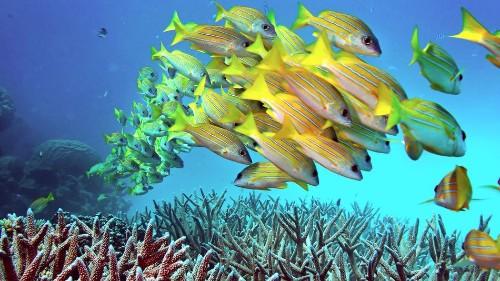 Marine conservation efforts just took a major step forward