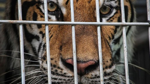 6 startling facts about wildlife trafficking — and how you can help