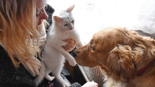 Survey says dog owners are happier than cat owners