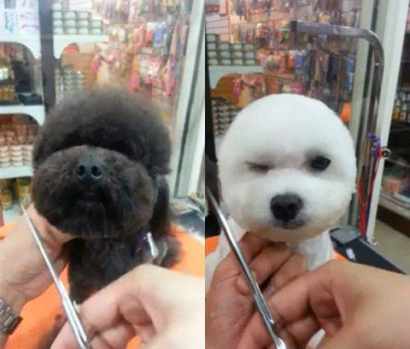 Square-faced dogs are now a thing in Taiwan