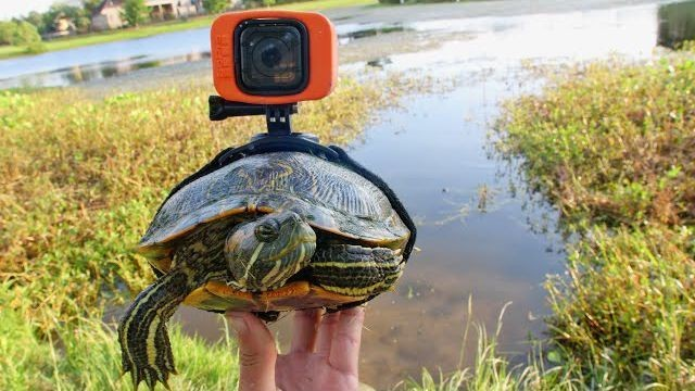 Man straps GoPro to a turtle and gets some incredible footage