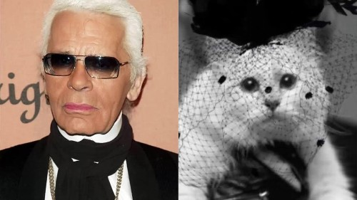 Karl Lagerfeld's cat could inherit a fortune
