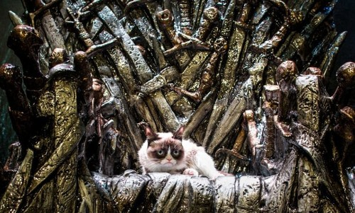 Grumpy Cat Has Passed Away. Here Are The Best Memes To Remember Her By - Culture