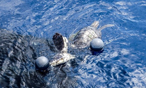 Researchers Use LED Lights To Save Dolphins And Turtles From Fishing Nets - Science