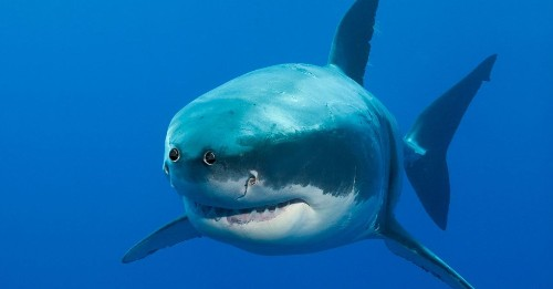 8 animals with front-facing eyes that will delight and terrify you