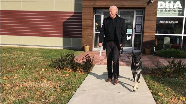 Joe Biden adopted a German shepherd and he's precious :')
