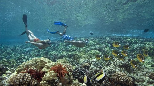 Hawaii bans sunscreens deemed harmful to coral reefs