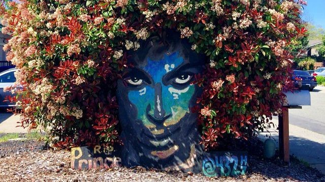 Prince gets a brand new tribute in the form of a flowering bush