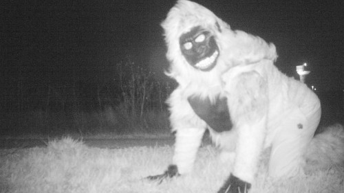 Police tried to capture a mountain lion on camera, but it got real weird instead