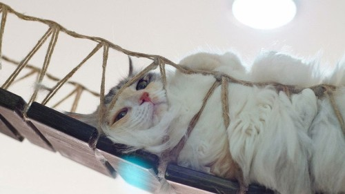 The residents of Singapore's Cat Museum are ready for your cuddles