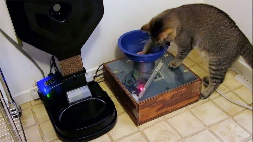 Man's clever contraption lets his cat hunt for dinner