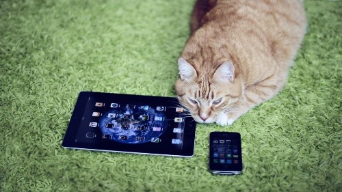 Facebook disables user's account for sharing a cat photo