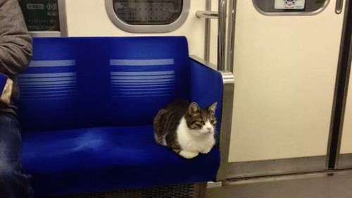 This cat is a total boss at navigating Tokyo's subway