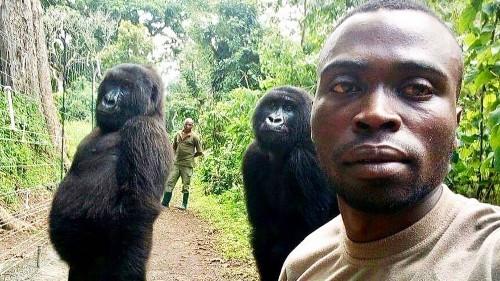 Park ranger's gorilla selfie goes viral
