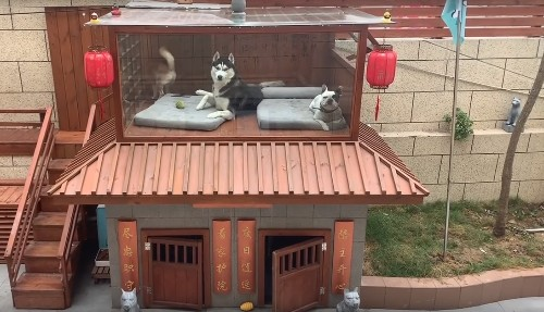 Dog-loving man builds a two-storey luxury villa with pool and spa for his dogs - Culture