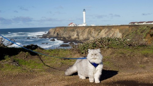 Gandalf the traveling cat takes better vacations than you
