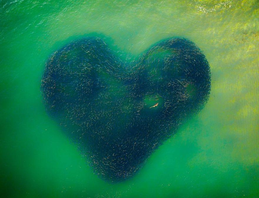 Un cuore nel mare: lo scatto vincitore dei Drone Photo Awards 2020