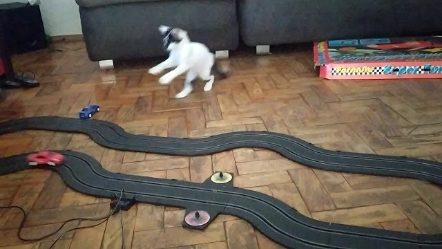 Watch this kitten's hilarious reaction to a toy race car