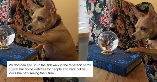 Clever dog uses crystal ball to see the front sidewalk, and maybe the future