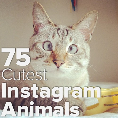 The 75 Absolutely Cutest Animals on Instagram