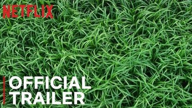 Netflix tackles another Stephen King tale in panic-inducing 'In the Tall Grass' trailer