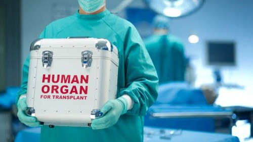 How did what could be the largest human organ elude us until 2018?