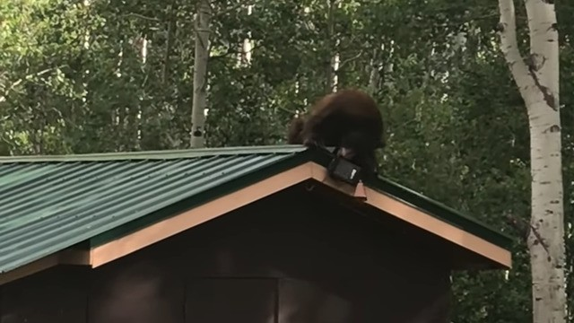 Acrobatic bear makes off with a bird feeder and we're not even mad