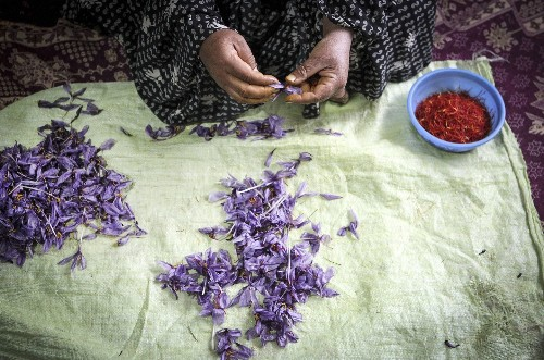 The most expensive food on earth is found in a sea of purple flowers