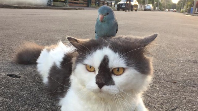Lazy little bird hitches a ride on uninterested cat