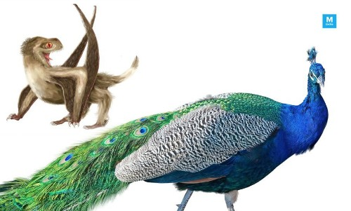 Feathers Existed About 250 Million Years Before Birds, Claims Study