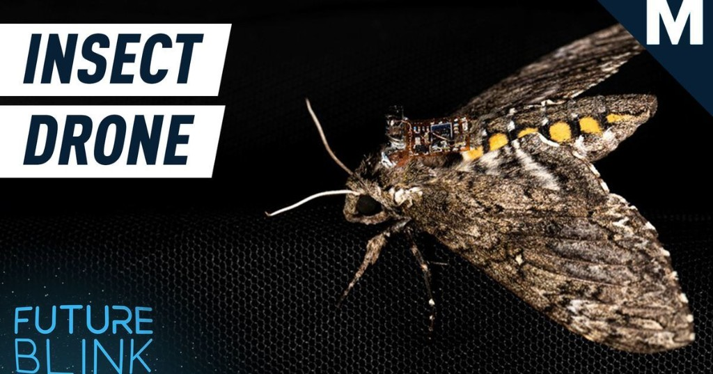 Researchers are using insects to airdrop lightweight sensors