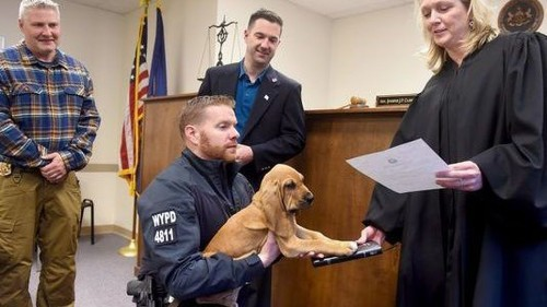 Paws for a moment, because this puppy detective being sworn in is the best