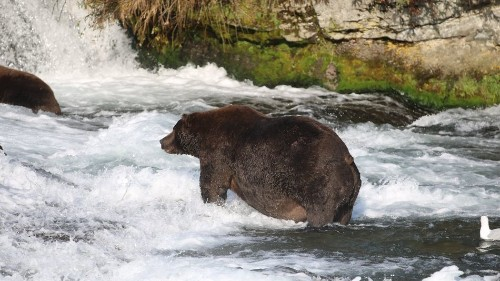 The bar that airs the dramatic, live fat bear cams
