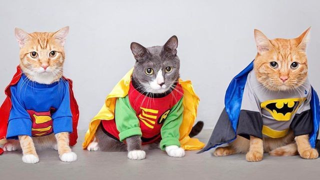 A bunch of truly annoyed cats (and one sad chug) looking sharp on Dress Up Your Pet Day