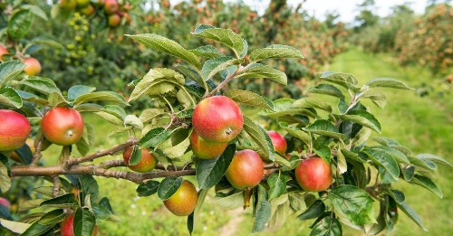 20 best places to go apple picking in the northeastern U.S.