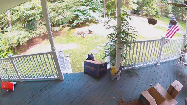 Video shows bear stealing package of dog food from Chewy off family's front porch
