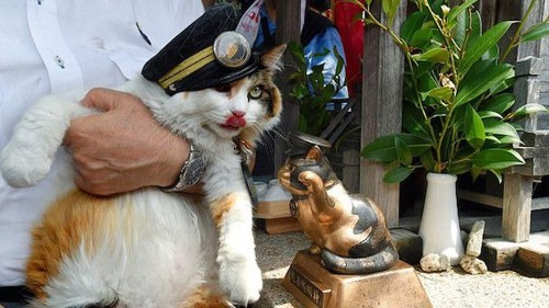 Railroad in Japan hires its second cat stationmaster in 10 years