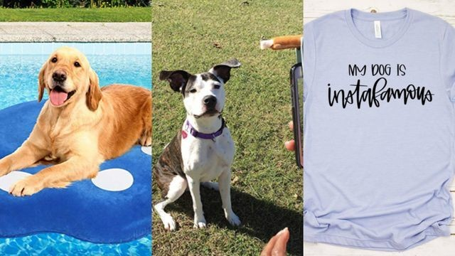 13 gifts for the aspiring dogfluencer in your life