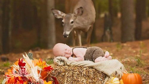 Baby photo with friendly photobombing deer can't get any more magical