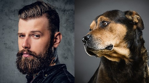 Study says dogs carry fewer germs than bearded men