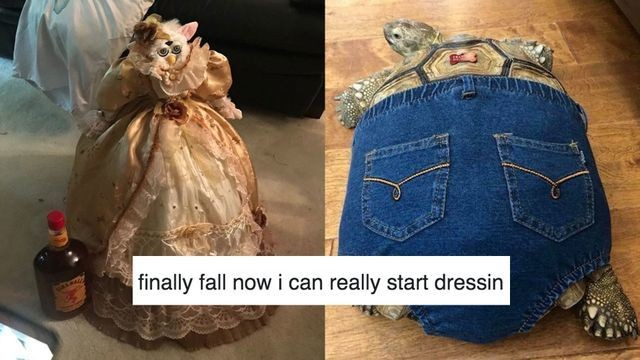 Meme declares it's finally fall, now you 'can really start dressin'
