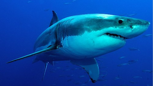 Archaeologists Discovered Fossils Of An Unknown Species Of Prehistoric Shark - Science