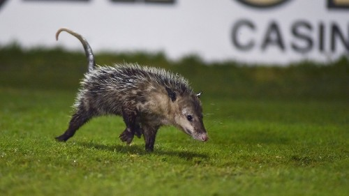The best places to go on the internet if you stan possums