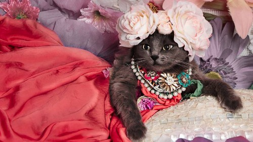 Rescue cat Pitzush Puss In Glam is a fabulous feline fashion model