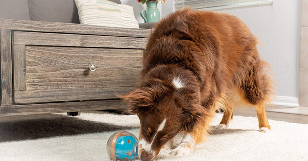 Best gifts for pet parents 2020: 20 ideas for dog and cat owners