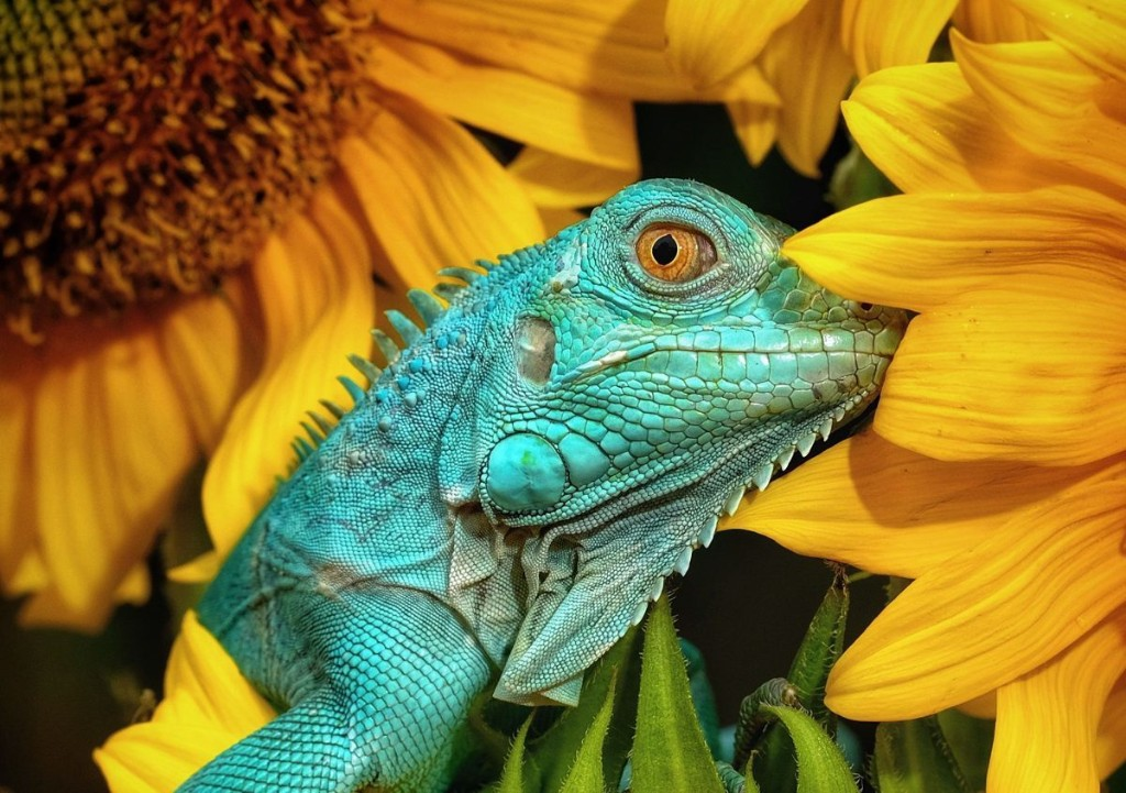 15 Of The Best Animal Photos From 2020
