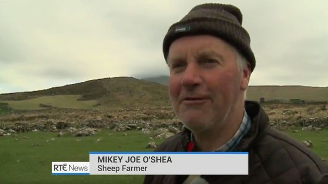 Irish farmer's glorious accent is so strong even Irish people can't understand it