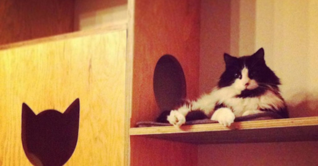 Cat cafe closes after all its little cats are finally adopted